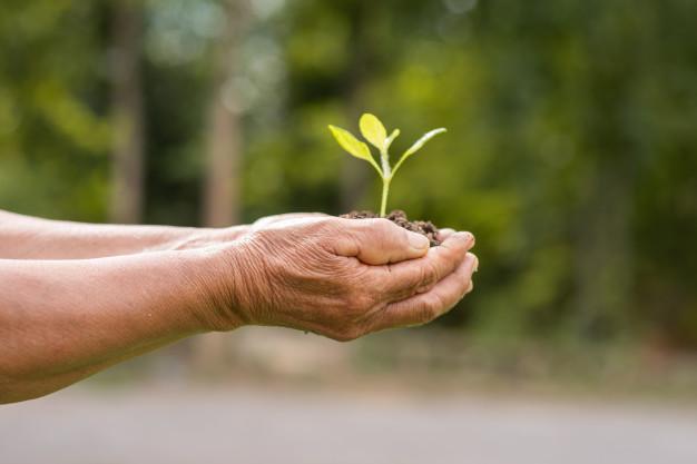 گیاه-در-دست-شخص-سالمند
